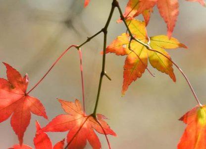 Odpusty zupełne dla wiernych zmarłych przezcały listopad